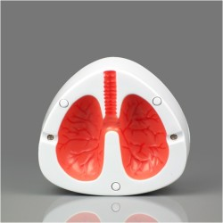 - Öksüren Akciğer Küllük